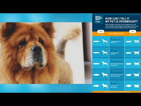 VIDEO: How to tell if your pet is overweight