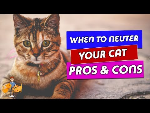 When Should You Neuter a Cat and Why: the risks and benefits