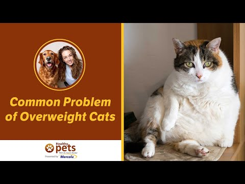 Common Problem of Overweight Cats (Part 2 of 2)