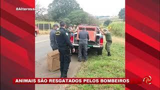 Animais Resgatados No Sul De Minas