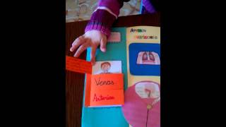 video lapbook cuerpo humano wmv