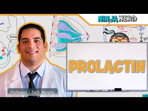 Endocrinology | Prolactin
