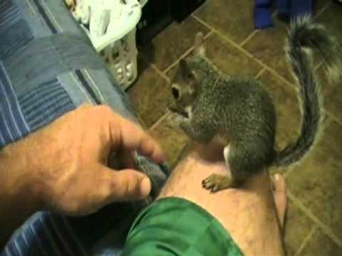 Pet Squirrel Training