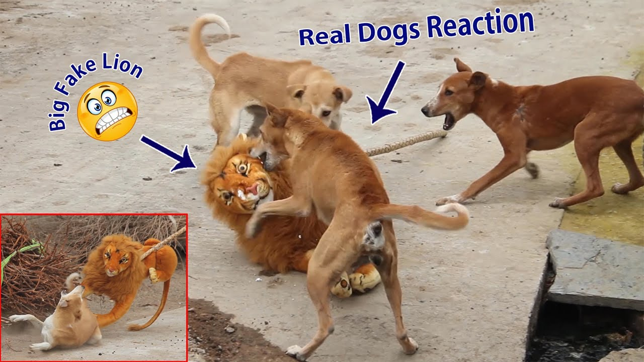 Fake Big Lion Prank Dog So Funny Can Not Stop Laugh Must Watch New Funny Prank Video 2021