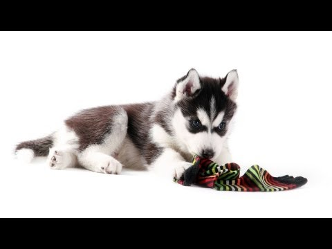 Teach Your Puppy to Leave Things Alone | Puppy Care