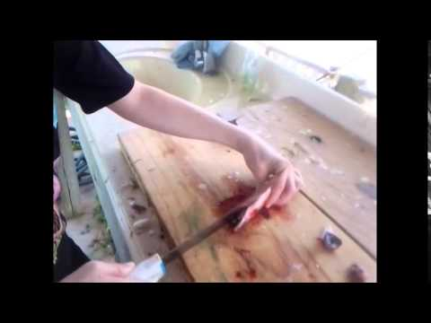 How to fillet a live mullet for bait!