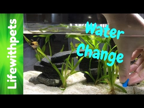 How to do a Water Change on a Betta Fish Tank