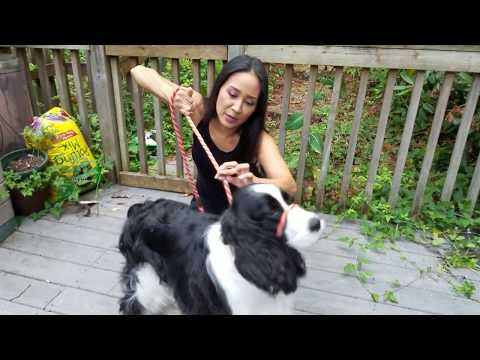How to Put Slip Lead on Dog to Prevent Pulling While Walking