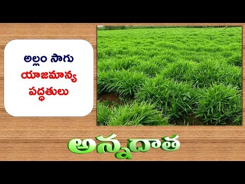 Ginger Package of Practices || ETV Annadata