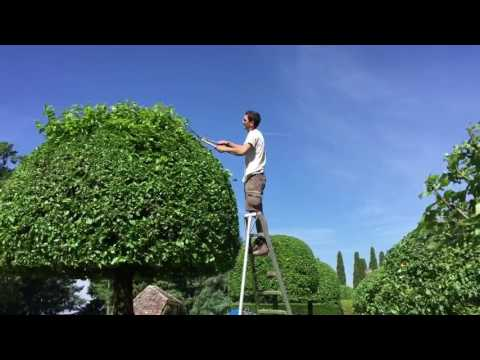 Haircut. Formation of tree crown. Topiary trees haircut. Pruning tree. Pruning trees