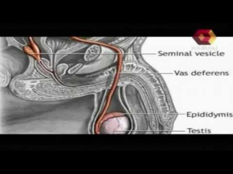 Vandhyathayude Kanappurangal | Premature Ejaculation | 28 09 2013 | Part 2