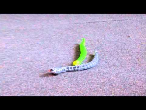 Infrared Remote Control Rattle Snake