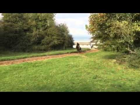 DG cantering
