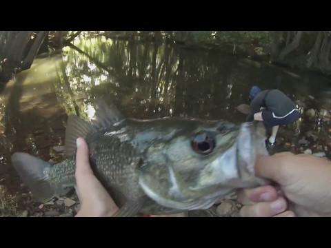 Australian Bass Fishing Ep. 1: Skinny-Water Creek