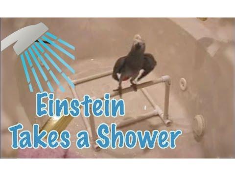 Einstein the Parrot Takes a Shower!