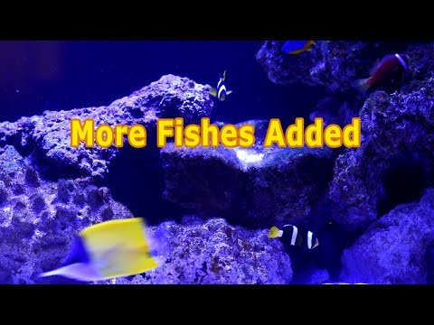 How To Add New Fish To The Tank |  Week #5,6,7 More Fishes Added | HOW TO Cycle Reef Tank