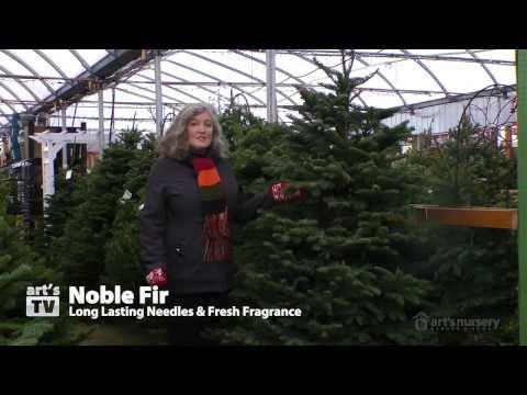 Choosing a Christmas Tree at Art's Nursery