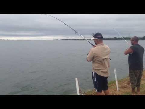 Redfish at Braunig Lake