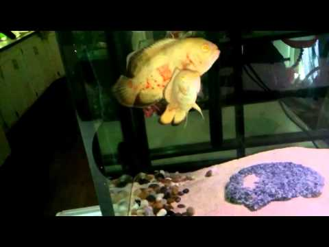 How to maintain clean/clear water in Aquarium