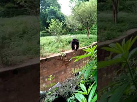 Funny bear @ Zoo