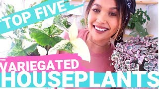 Top Five Favorite Variegated Plants 2019