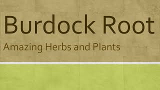 Burdock root Health Benefits - Health Benefits of Burdock root - Amazing Herbs and Plants  Burdock root health benefits  Burdock roots, young shoots, peeled stalks, and dried seeds carry numerous compounds that are known to have been anti-oxidant, disease preventing, and health romoting properties.  This herb root contains small quantities of many vital vitamins, including folic acid, riboflavin, pyridoxine, niacin, vitamin-E, and vitamin-C that is essential for optimum health. Both vitamin C and E are powerful natural antioxidants help the human body stave off infections, cancer and neurologic conditions.  Furthermore, it also contains some valuable minerals such as iron, manganese, magnesium; and small amounts of zinc, calcium, selenium, and phosphorus.  WELLNESS Alternative Medicine   SUBSCRIBE FOR MORE VIDEOS https://www.youtube.com/channel/UCJDgdO3wSVg2ZN2sAeI_dHg  Follow as on Google+ https://plus.google.com/103952358010852192647/videos  Follow as on Twitter https://twitter.com/wellness0333  Follow as on Tumblr http://benefitswellness.tumblr.com/  Benefits of Wellness https://www.youtube.com/channel/UCJDgdO3wSVg2ZN2sAeI_dHg/playlists  Top 10 Health Benefits Easy and Healthy Recipes Amazing Herbs and Plants Top 10 Health Countdown Healthy Spices Super Nuts and Seeds Calories and Carbs Women
