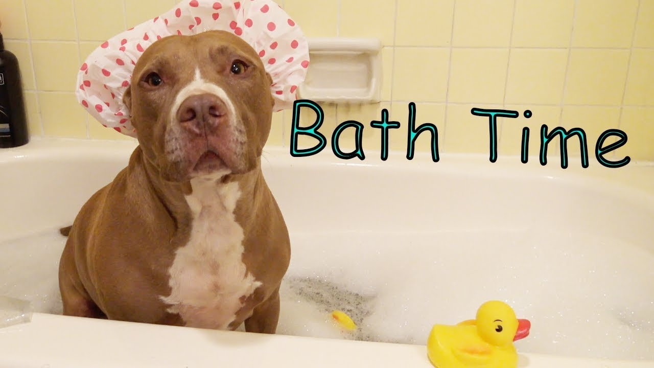 Bath Time | Robby and Penny