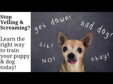 Puppy Training Tips And Tricks