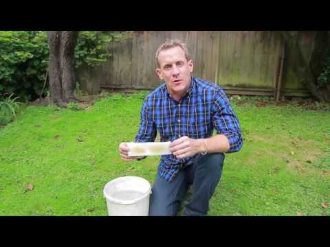 Nematodes for Lawn Grubs - NIC's How to Apply