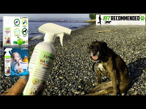 Vet Recommended Waterless Dog Shampoo Review