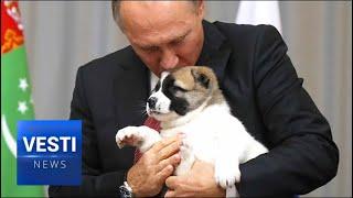 Putin Gets an  Asian Shepherd Puppy from Turkmenistan President at CIS Summit