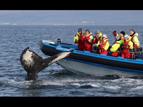 Whale Watching World of Gentle Giants Húsavík Iceland – Walbeobachtung Island