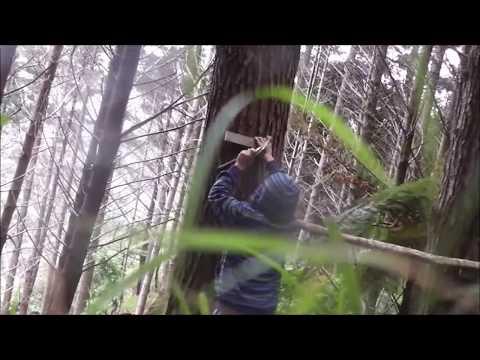 Making a salmon ladder from american ninja warrior