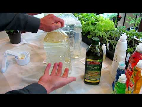 How to Make Neem Oil, Smothering Insect Oil and Fungicide Sprays: Recipes & Routines DIY Ep-4