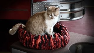 Meet Flame, the Firehouse Cat! | My Cat From Hell