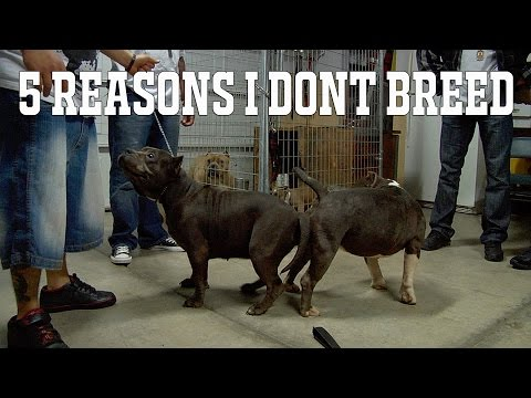 5 REASONS WHY I DON'T BREED DOGS