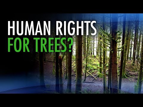 Eco-crazies who want human rights for trees are more powerful than you think
