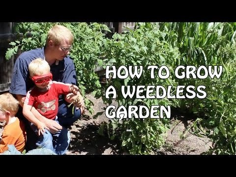 How to Grow a Weedless Garden