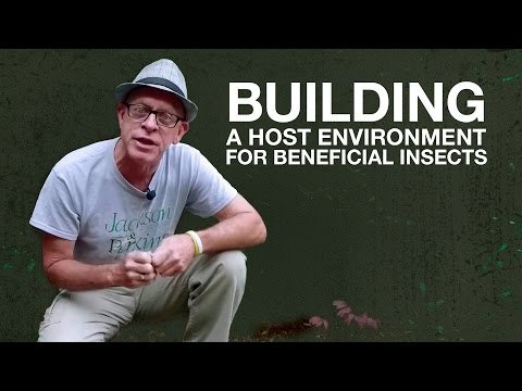 Building A Host Environment For Beneficial Insects with Paul Zimmerman