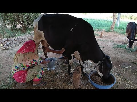 Happiness spring from with gaumata