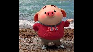 猪小屁跳麻辣舞