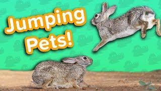 Jumpy Pets! // Funny Animal Compilation