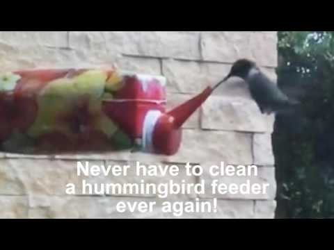 Never have to clean a hummingbird feeder ever again!