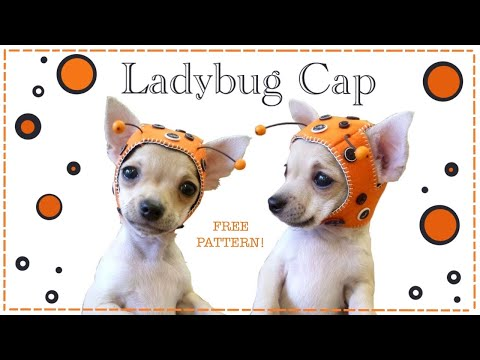 Ladybug cap for Chihuahua Puppy FREE PATTERN with Lisa Pay