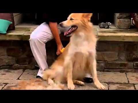 FURminator deShed Tool Dog Reduce Shedding