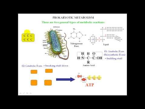 Prokaryotic Metabolism Warmup Info Part 1