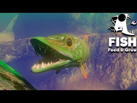Feed and Grow Fish 36 - Novo Pike Destruidor!!! (Deathmatch) (GAMEPLAY PT-BR)