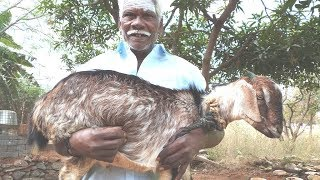 COOKING 10 Kg FULL GOAT FRY ||  Mouth watering Village Food  || Food Money Food