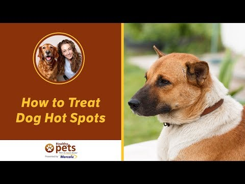 How to Treat Dog Hot Spots
