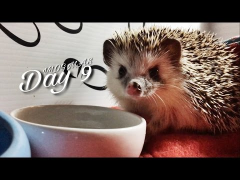 Munching Hedgehog & Tenrec Dry Skin (Vlogmas #9)